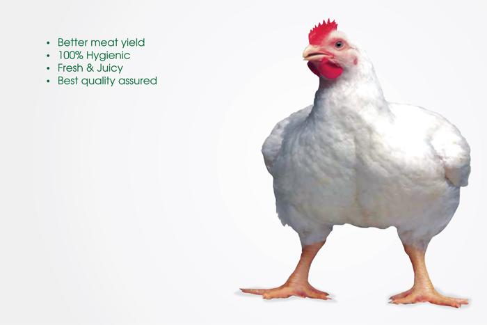 abis-chicken