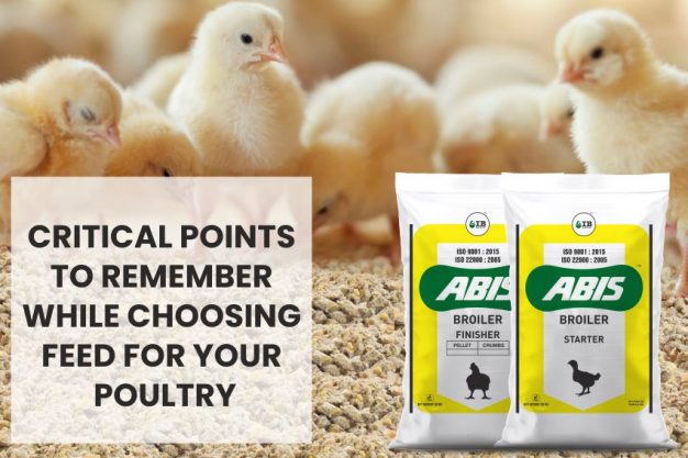 How to choose the right feed for your poultry?