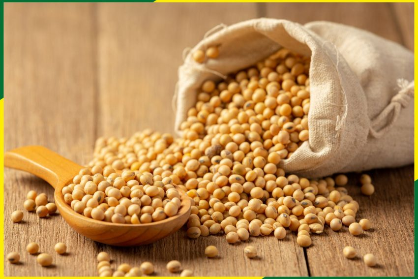 Government should Import duty-free soya meal for the farmers- All India Poultry Breeder Association